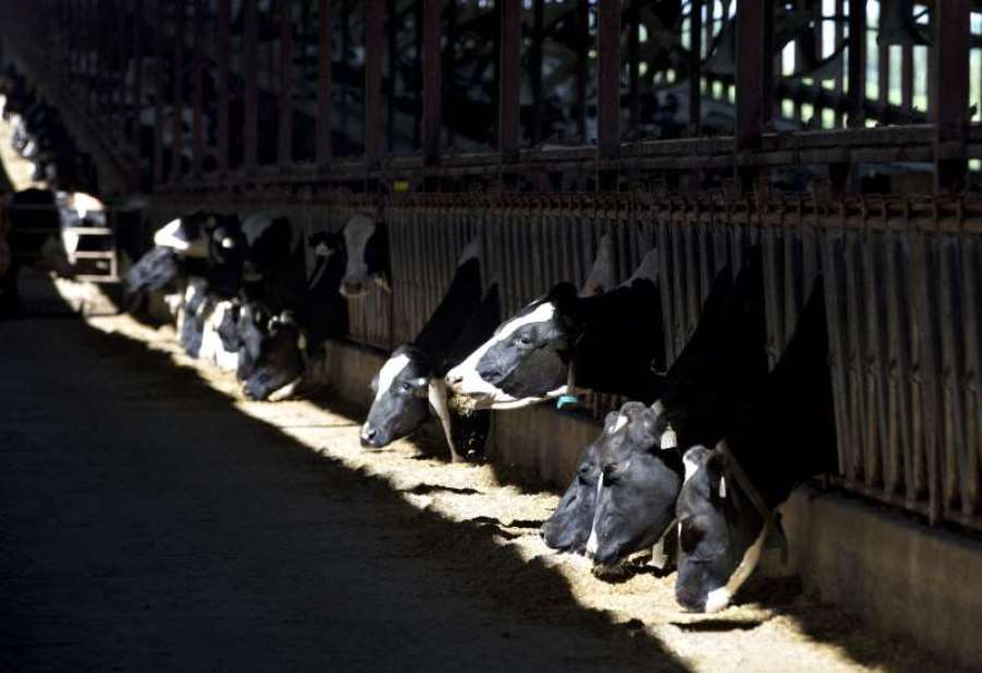 Arizona dairy farmers face oversupply and under demand, forced to dump milk during coronavirus outbreak [Video]